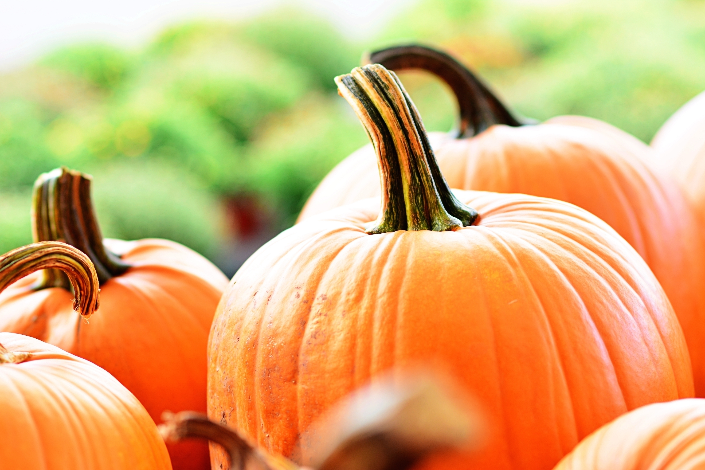 6d5b7af0746fb76ea21d_bc4152db90b111ad6fd9_bdc89505019582db4818_404f37a7fd92b84471bf_Halloween_Pumpkin.jpg