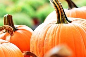 Carousel_image_6d5b7af0746fb76ea21d_bc4152db90b111ad6fd9_bdc89505019582db4818_404f37a7fd92b84471bf_halloween_pumpkin