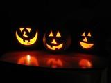 Thumb_429e9d401f28717c3c62_halloween1_lobo235