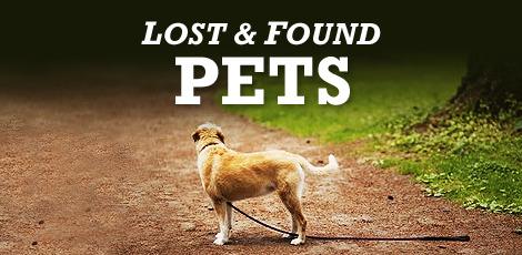 efdfd7184d8f3b0a6417_Stock_Image_-_Lost_Pets_-_V1.jpg
