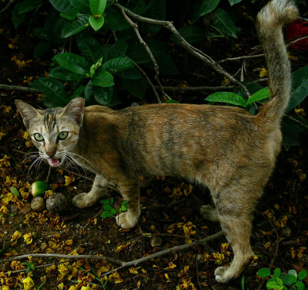 3c6d2b6ccbf53c5595fa_cat.jpg