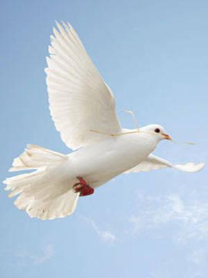 Obituary_062b4c5998490b4dc3d3_dove-2