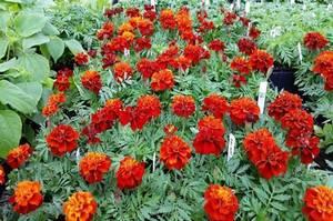 Obituary_f5691738416dd453026f_flowers