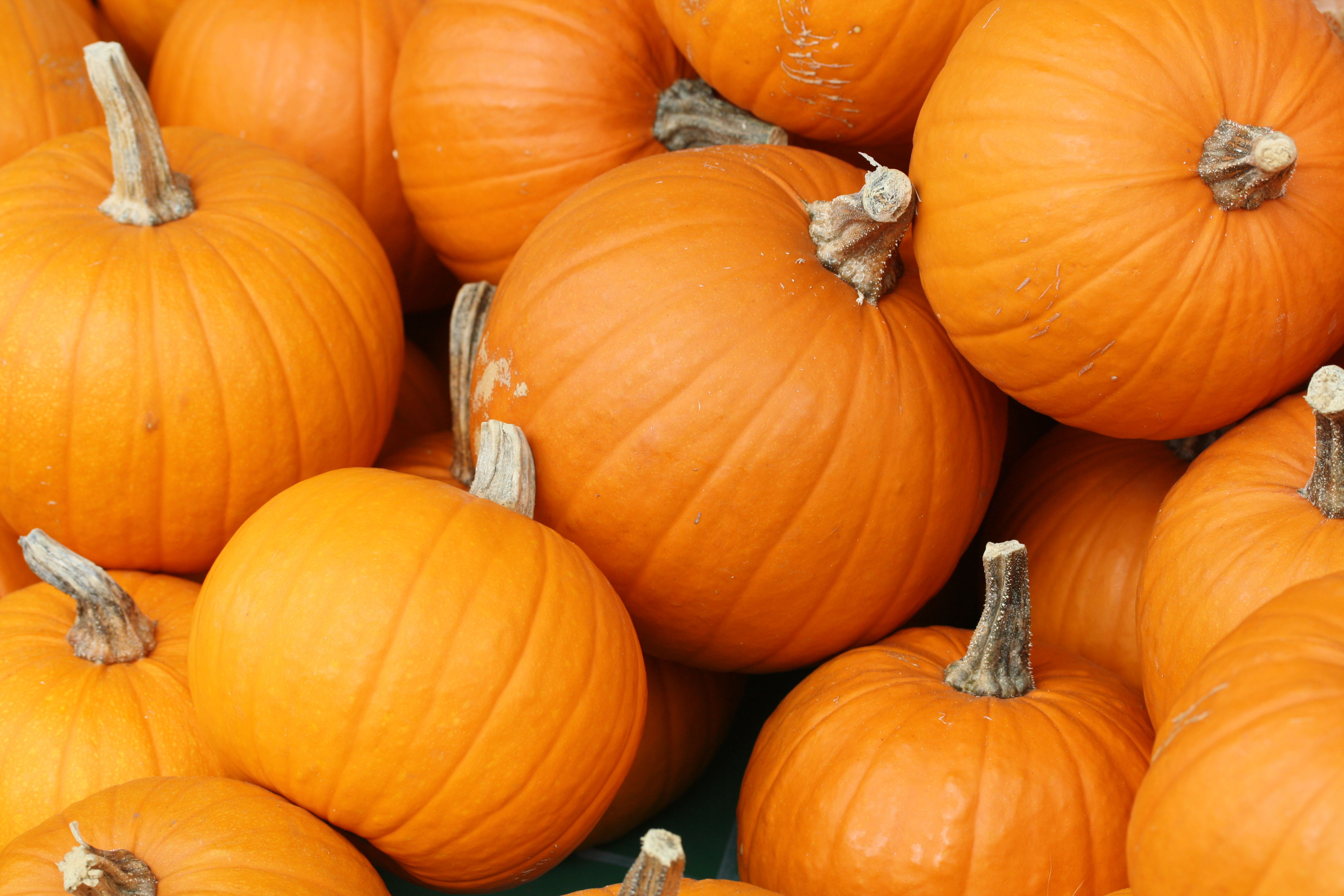 41af8be76b759abba677_bake_these__pumpkins_in_toronto_.jpg