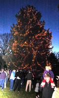 49ad3980ab6ab969578a_fanwood_christmas_tree.jpg