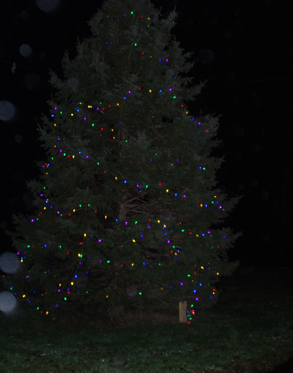 84c4b42916d7914443fa_tree_003.jpg