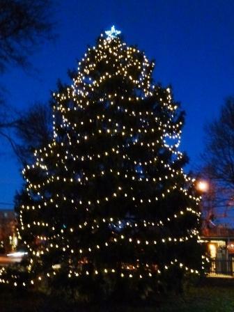 87595c4a3e5cbd56fe33_tree_2011.compressed.p1010320.jpg