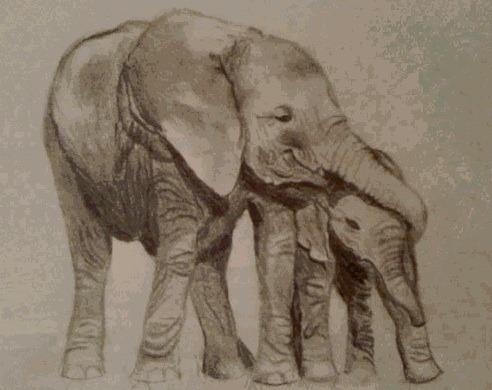 952de354f83a8e427d6c_maggie_elephant.jpg