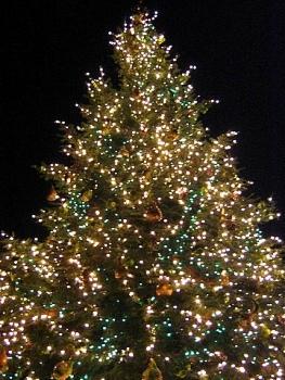 9b3ff7e745771b56b1bf_christmas-tree.jpg