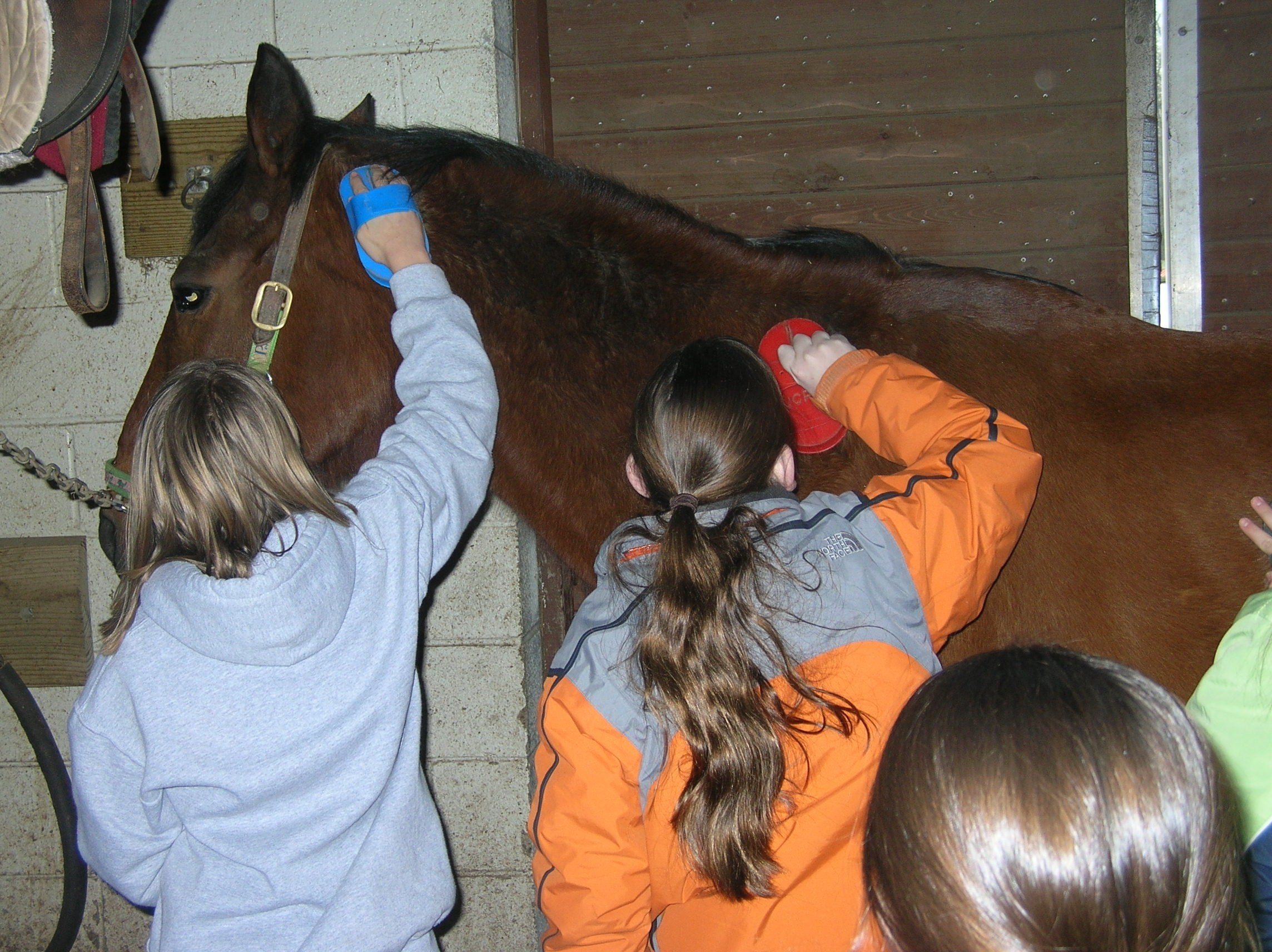 a11cefb03d244413ac48_Grooming_at_Watchung_Stable.jpg