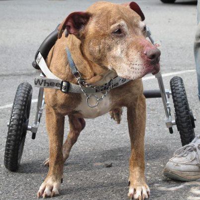 b0c4866a1e180ccb20b3_Taz_wheelchair.jpg