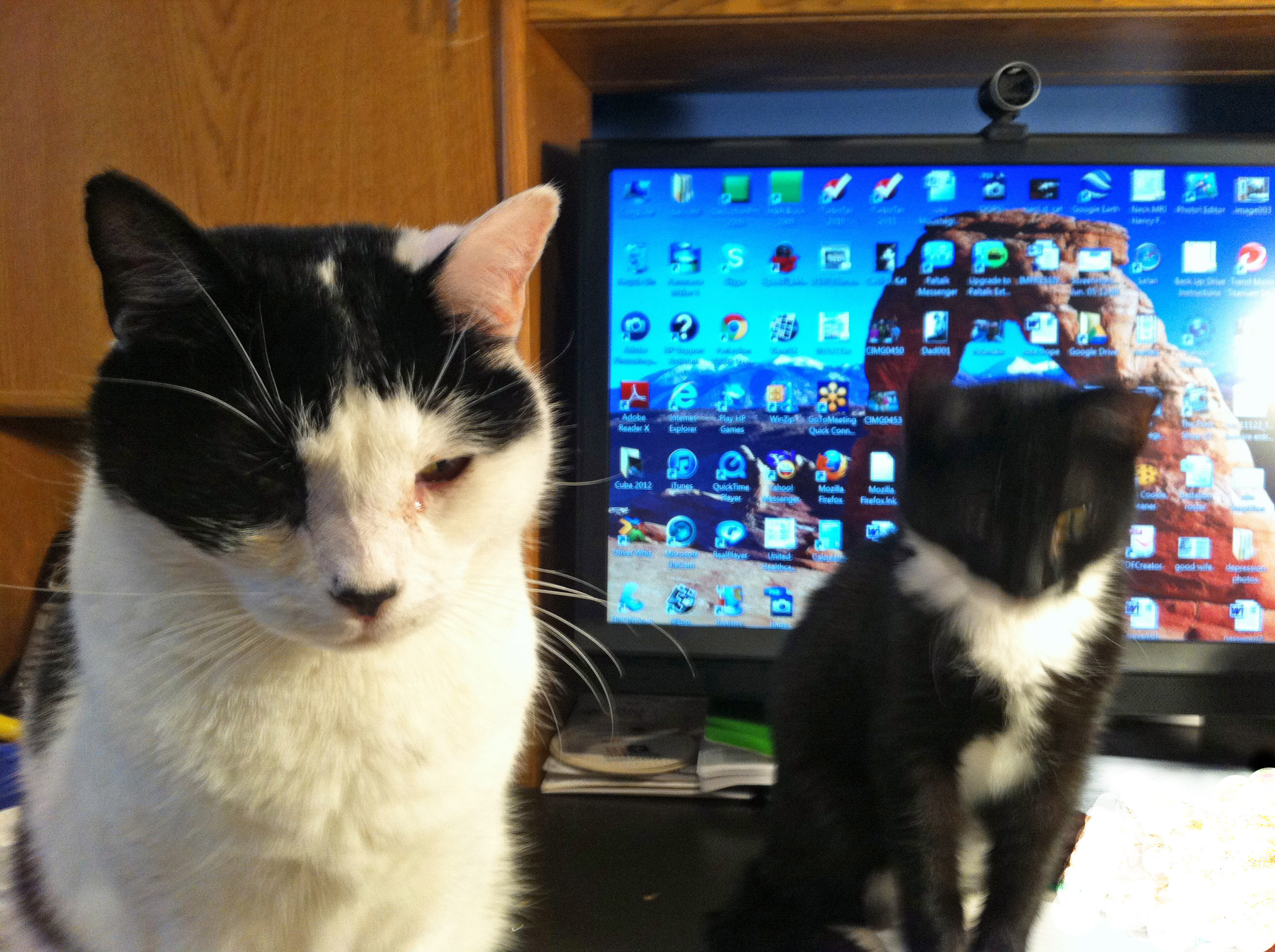 ca0628fb24120505adbc_cats.jpg