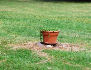 Flower Pot Decoy