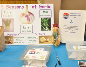 Educational information about Garlic.