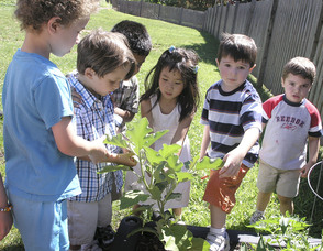 Preschool group gardening project