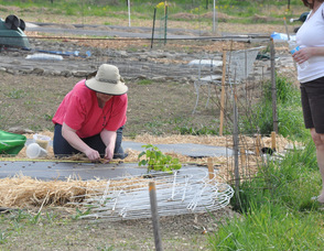 A participant at the community garden spends some time in the garden.
