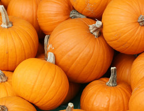 Pick Some Pumpkins at the Essex County Environmental Center on Saturday