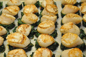 Immense Viking Sea Scallops ready for the dining room.