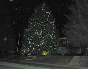 The Tree Lights Up the Night