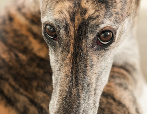 Greyhound 16th Annual Craft Show & Pet Expo Rescheduled due to Sandy, photo 1