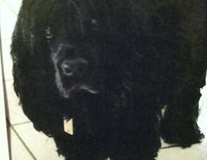 Arlene Michel Rich's dog, Rosie.