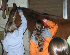 Learn about Horses in Weekend Classes at Watchung Stable , photo 1