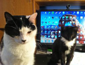 Carousel_image_ca0628fb24120505adbc_cats