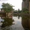 Small_thumb_402432fe27a2eabee8e2_flood5__1_