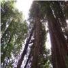 Small_thumb_f20f7f9b449c077b6f23_greenpoint