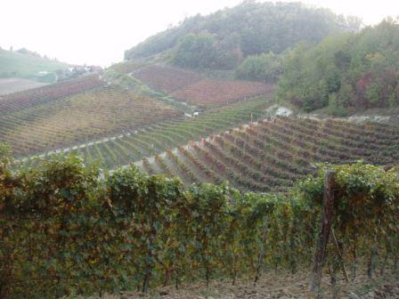 98bed190522952d0c2d1_piemonte_20fall_20vineyard_20.jpg