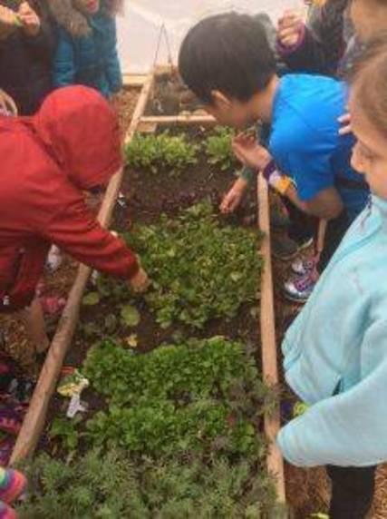 Top_story_04a8d55c662efbf69ca2_garden