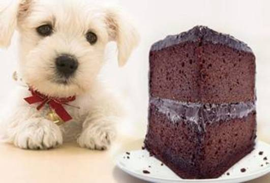 Top_story_08b3ca32849afe73b6f6_dog_chocolate