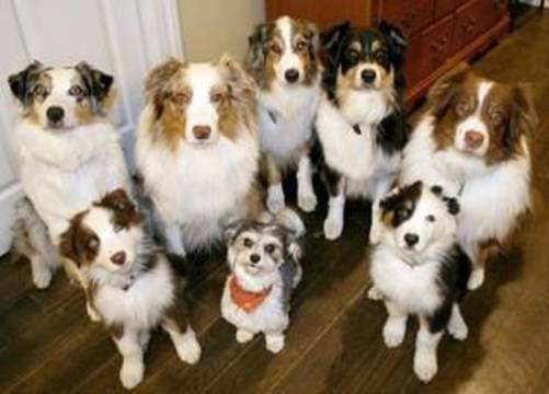 Top_story_0db66733434be2f0e267_dogs_cartersefile