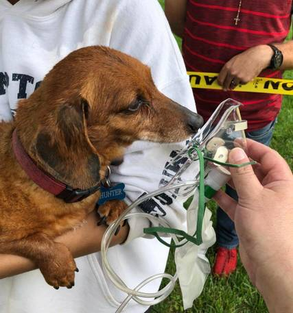 Top_story_14be9106912815ccaa6d_dogrescue