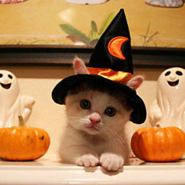 Top_story_14ce6e7cbb392db6f4fc_halloween_cat