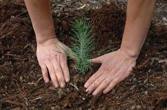 Top_story_19dab6506ec05a9860c6_tree_planting