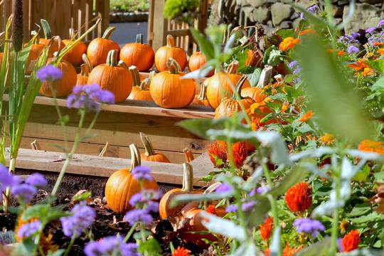 Top_story_25aa7a7a482841999a12_2a004e693c63d5a43f23_pumpkins__12_