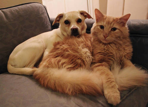 Top_story_2e62a85e33ee22099728_dog_and_cat