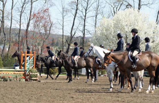 Top_story_33d55f60d2d2ed38a999_horse_show