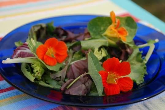 Top_story_4d28b531f81cc34f0a8b_nasturtium_in_salad