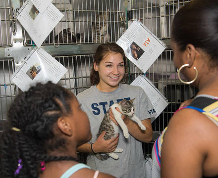Top story 4f05893ced6f527926be clear the shelters melissa with kitten