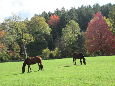 Top_story_52037598a35c716d1306_fall_pasture_10.22.10_012_copy