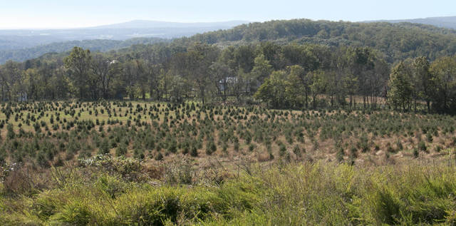 Top_story_55461e2e97469b45d422_charlie_brown_christmas_tree_farm_view_from_top_of_hill_panarama