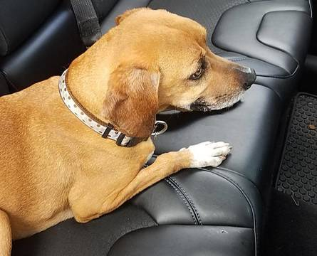 Top story 5deabced2f5b7919d6b3 kenilworth dog