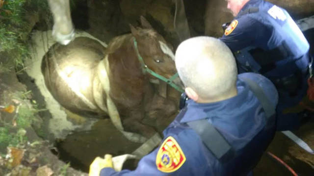 Top_story_67bcbefe0ea473c4da33_horse_rescued_from_cesspool