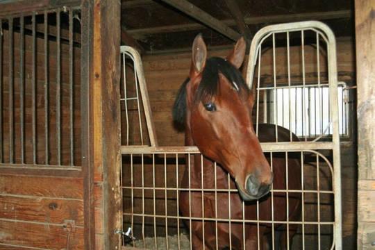 Top_story_73adea4f4fb17aa08e67_horse_in_stall