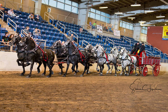 Top_story_7e244e94179a95538e37_keystone_international_draft_horses187