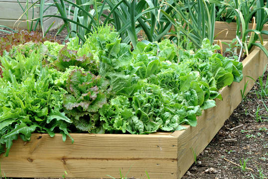 Top_story_8aa5ef21f0ded4a74d19_container_gardening