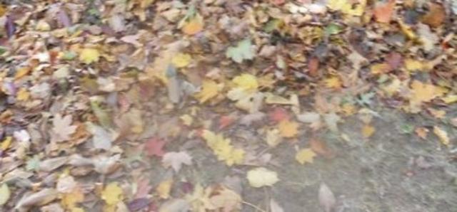 Top_story_a5fb84556b81e026a6ce_fall_leaves