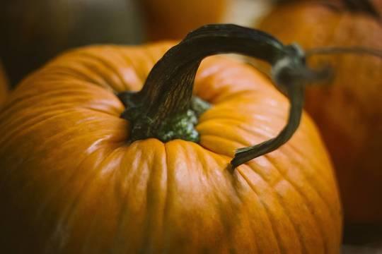 Top_story_ab1888d132e362676ef4_pumpkin-1031112_1920
